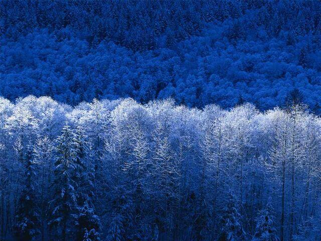 File:Winter.jpg