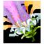 File:Bouquet.png