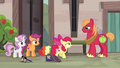 Apple Bloom approaching Big McIntosh S7E8.png