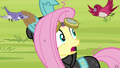 Fluttershy 'She's in the Everfree Forest' S3E05.png