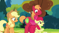 "Apple Bloom ""I ran into Grand Pear yesterday"" S7E13"