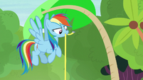 Rainbow Dash measuring the palm tree S7E5