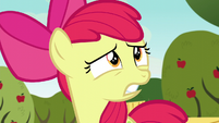 "Apple Bloom shocked ""what?!"" S5E4"
