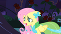 """Fluttershy """"This isn't what I wished for"""" S1E26.png"""