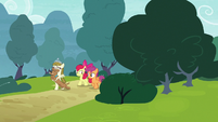 Apple Bloom, Scootaloo, Zipporwhill, and Ripley appear S7E6