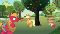 AJ, Apple Bloom, and Big Mac at Sweet Apple Acres S7E9