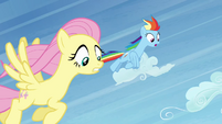 Fluttershy and Rainbow Dash fly after Peachbottom S03E12