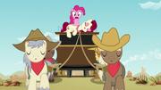Pinkie shocked; stallions sleeping S5E11