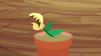Seedling coughing S4E15