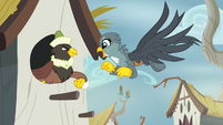 Male griffon snatching his mail from Gabby S6E19