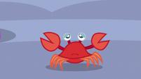 Crab looking sad S6E22