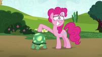 Pinkie Pie presenting Tank to Maud S7E4