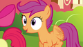 "Scootaloo ""Cool!"" S4E15.png"