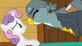 Gabby gets excited in Sweetie Belle's face S6E19.png