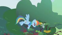 Rainbow Dash herds a stray parasprite S1E10