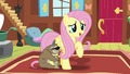 """Fluttershy """"I appreciate you sharing your thoughts"""" S7E5.png"""