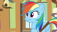 Rainbow Dash looking confused S6E11
