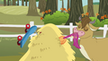 Cow eating Scootaloo's tail S3E6.png