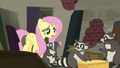 Fluttershy apologizing to the raccoons S6E9.png