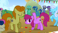 Berryshine, Sweetie Drops, Golden Harvest, and Shoeshine at the starting line S1E13.png