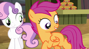 Scootaloo imagines a barrel cutie mark S5E6