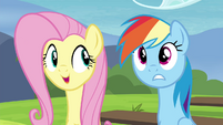 Fluttershy explain what races Tank, Winona and Gummy play as S4E21