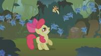 Apple Bloom tosses Applejack in the air S1E09