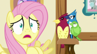 "Fluttershy ""Who am I kidding?!"" S5E21"
