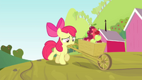 Apple Bloom pushing a wagon of apples S4E17