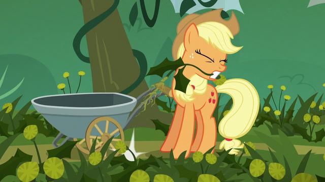 File:Applejack pulling weeds S5E16.png