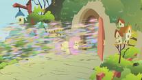 Swarm flying past Fluttershy S01E10