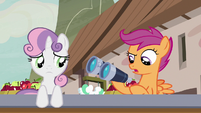 "Scootaloo ""shouldn't have taken the binoculars"" S7E8"