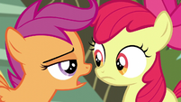 "Scootaloo ""we've got responsibilities now"" S5E4"