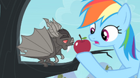 Bat sniffing the apple S4E07