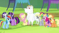 Rainbow Dash walking up to Ponyville team S4E10