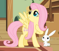Fluttershy talking to Angel S01E22.png