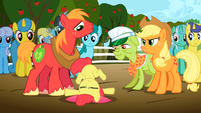 Big McIntosh looks down at Apple Bloom S2E15