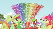 Rainbow of fruit bats 2 S03E08