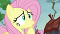 Fluttershy worried about the mice S5E23.png