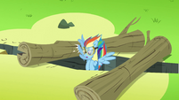 Rainbow Dash going between 2 logs S3E7