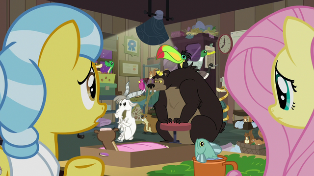 File:Fluttershy and Fauna look at still crowded clinic S7E5.png