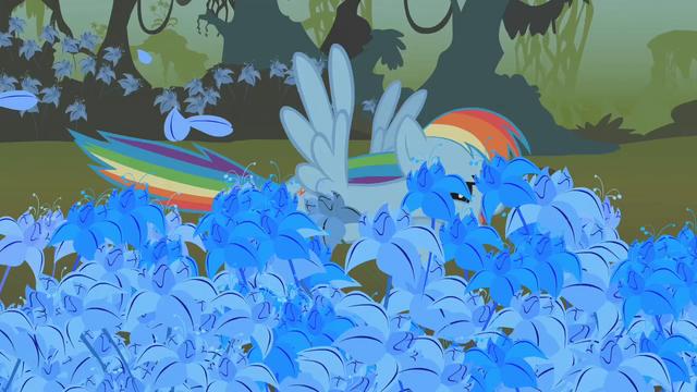 File:Rainbow Dash flying through the poison joke S1E09.png
