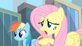 Fluttershy 'What if you find a Gloomy Gus' S4E08.png