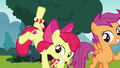 Apple Bloom enticing Ripley with chew toy S7E6.png
