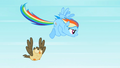 Rainbow Dash about to fly fast S2E07.png