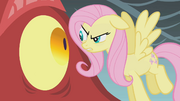 Fluttershy looks at the dragon in the eye S1E07.png