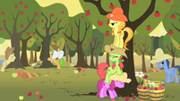 Appleloosans gathering apples S1E21