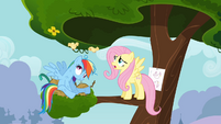 Chicks flying in circles on Rainbow Dash's head S4E04
