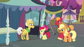 Apple Bloom approaching Grand Pear S7E13.png