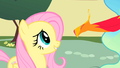 Fluttershy and the new Philomena S01E22.png